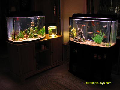 Tropical Fish Aquariums
